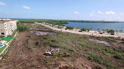Devastación de manglar