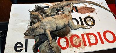 Presentación de animales muertos