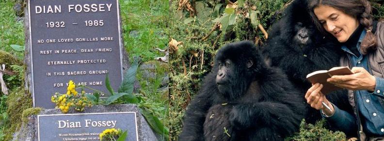Gorilas en la niebla Dian Fossey