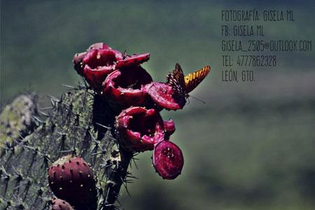 Fotografía digital profesional León Guanajuato Gisela